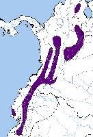 Туканет малиновокрестовый