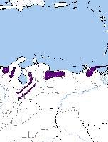 Туканет малиновоклювый