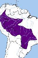 Каштановоклювый арасари