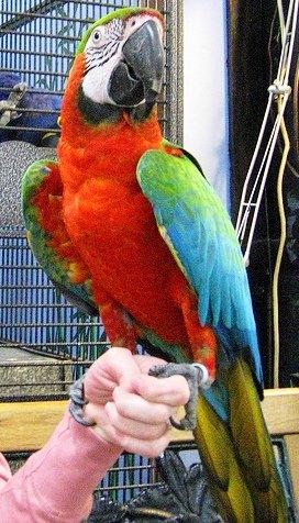 Кто из тетради смерти купил тебе животное?  Это попугай.