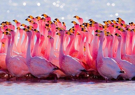 Большая подборка фотографий птиц.