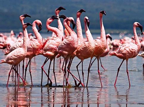 http://www.elitparrots.ru/foto_flamingo/ee53489dcd34.jpg