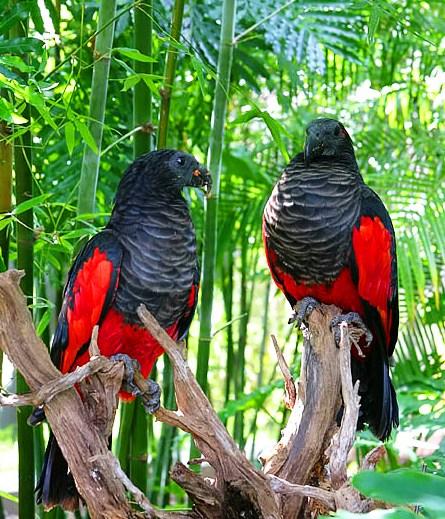 Фотография также находится в архивах: птенцы птиц фото.