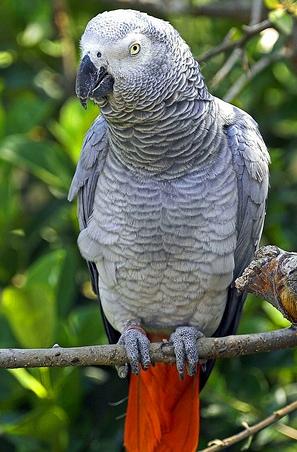Может кто знает где можно купить такого попугайчика не очень дорого,или...