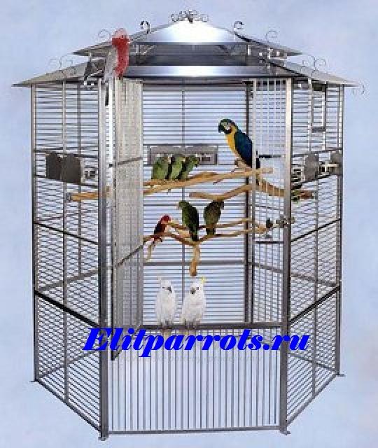 Ветки для попугаев