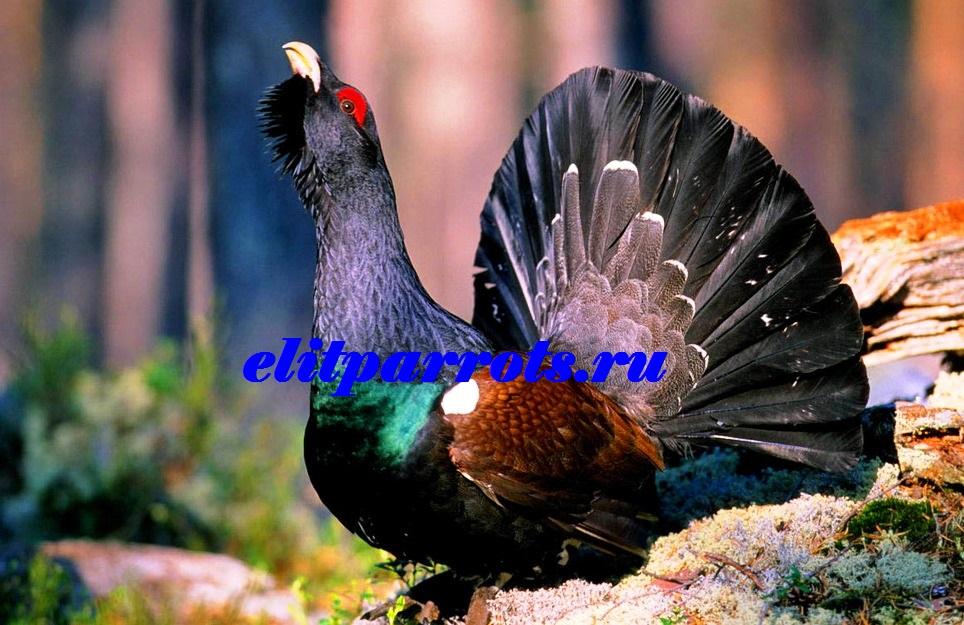 Жизнь животных Птицы